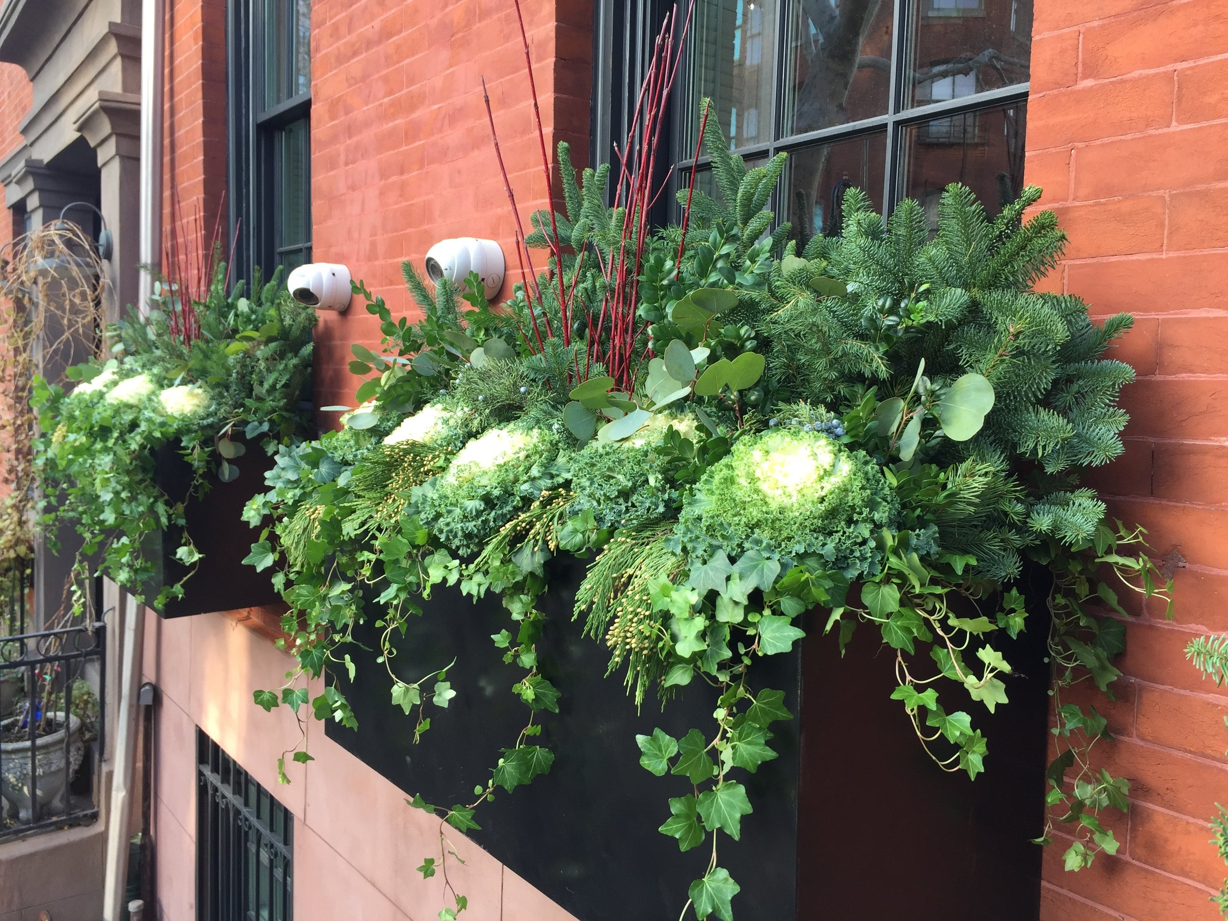 Brooklyn Heights Winter Evergreens