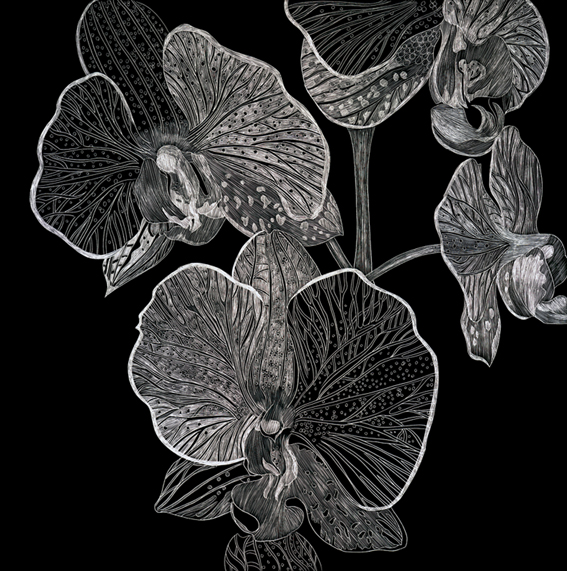 B&W Orchid