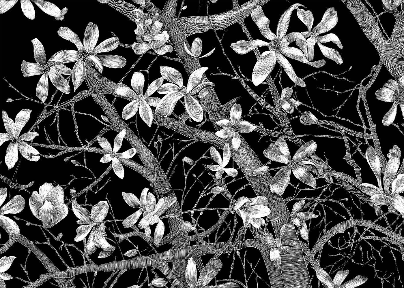 Open Magnolias