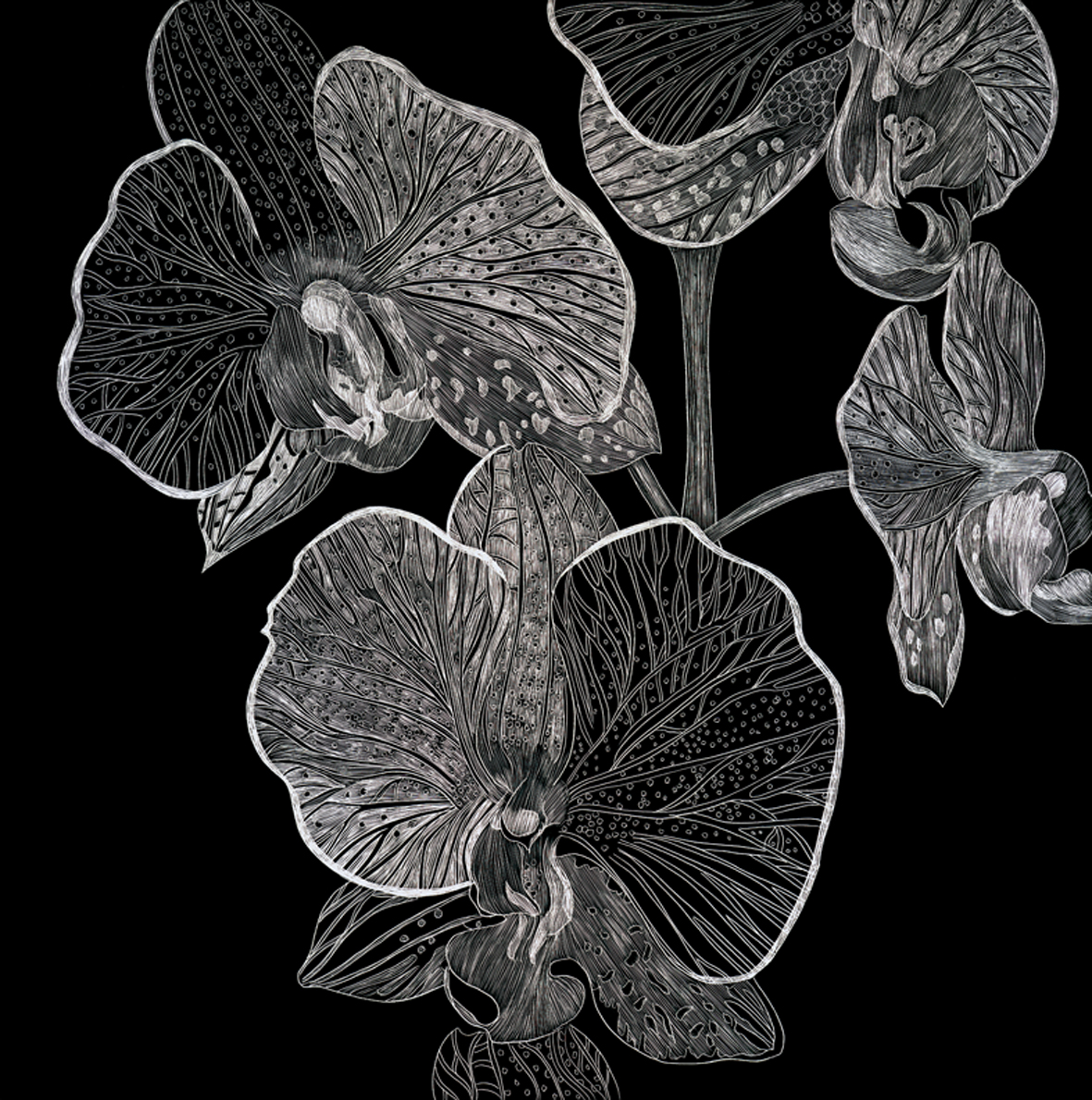 B & W Orchid by Lisa Goesling