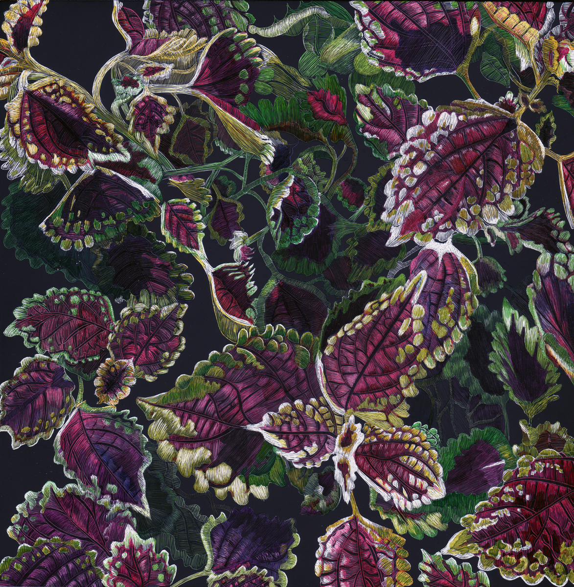 Composition of a Coleus by Lisa Goesling