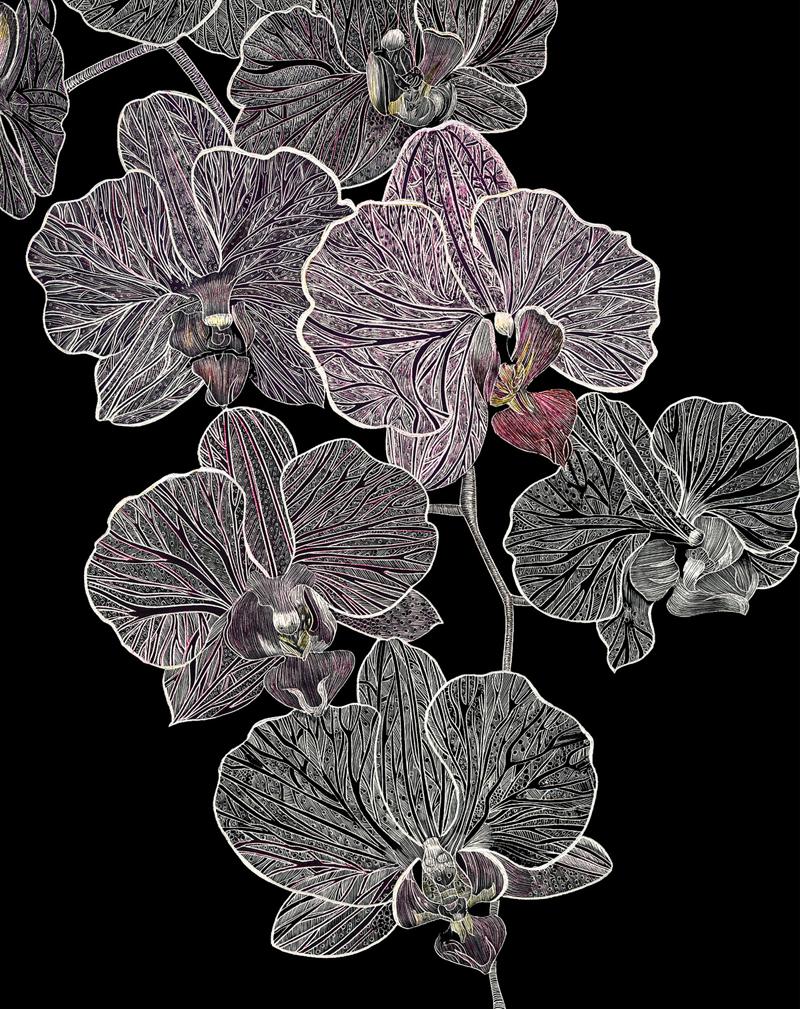 Full Orchid