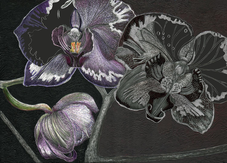 orchidsm.jpeg
