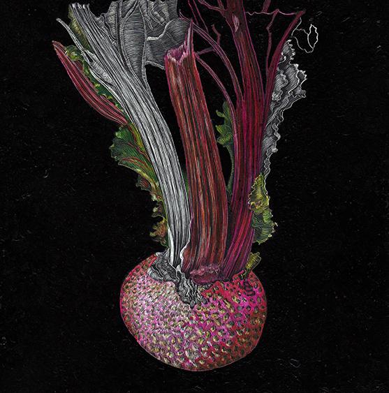 Beet in Soil by Lisa Goesling
