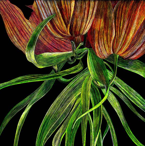 Orange Tulips Cropped by Lisa Goesling