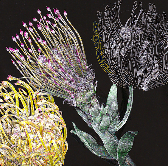 Protea by Lisa Goesling
