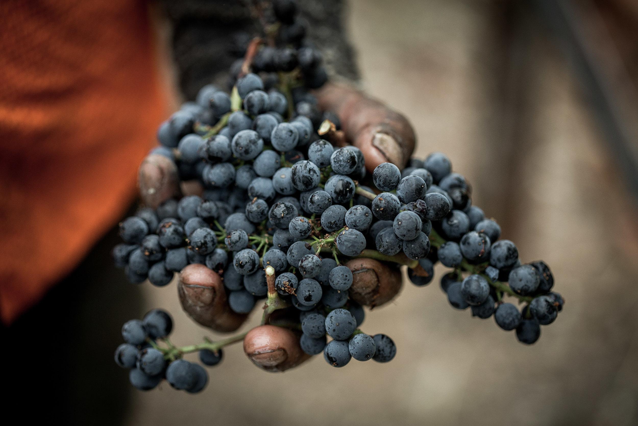 Arista Winery 2016 Russian River Valley, Sonoma