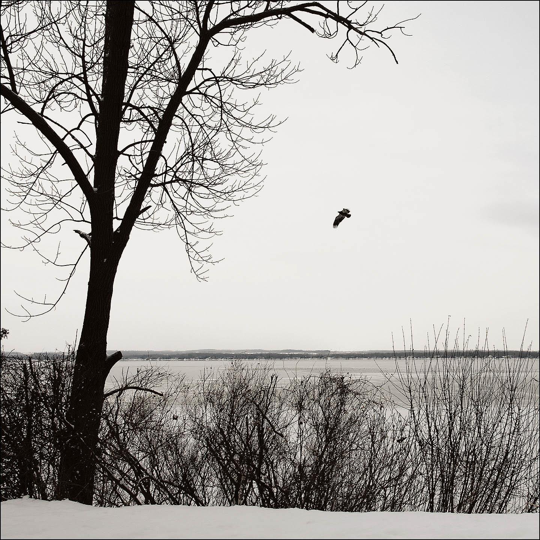 willow winter (62).jpg