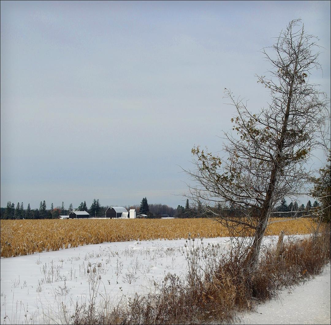 willow winter (3).jpg