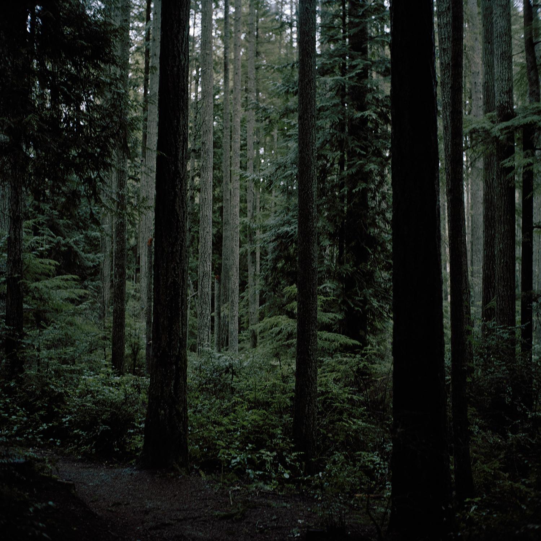 Forest (Darkens)