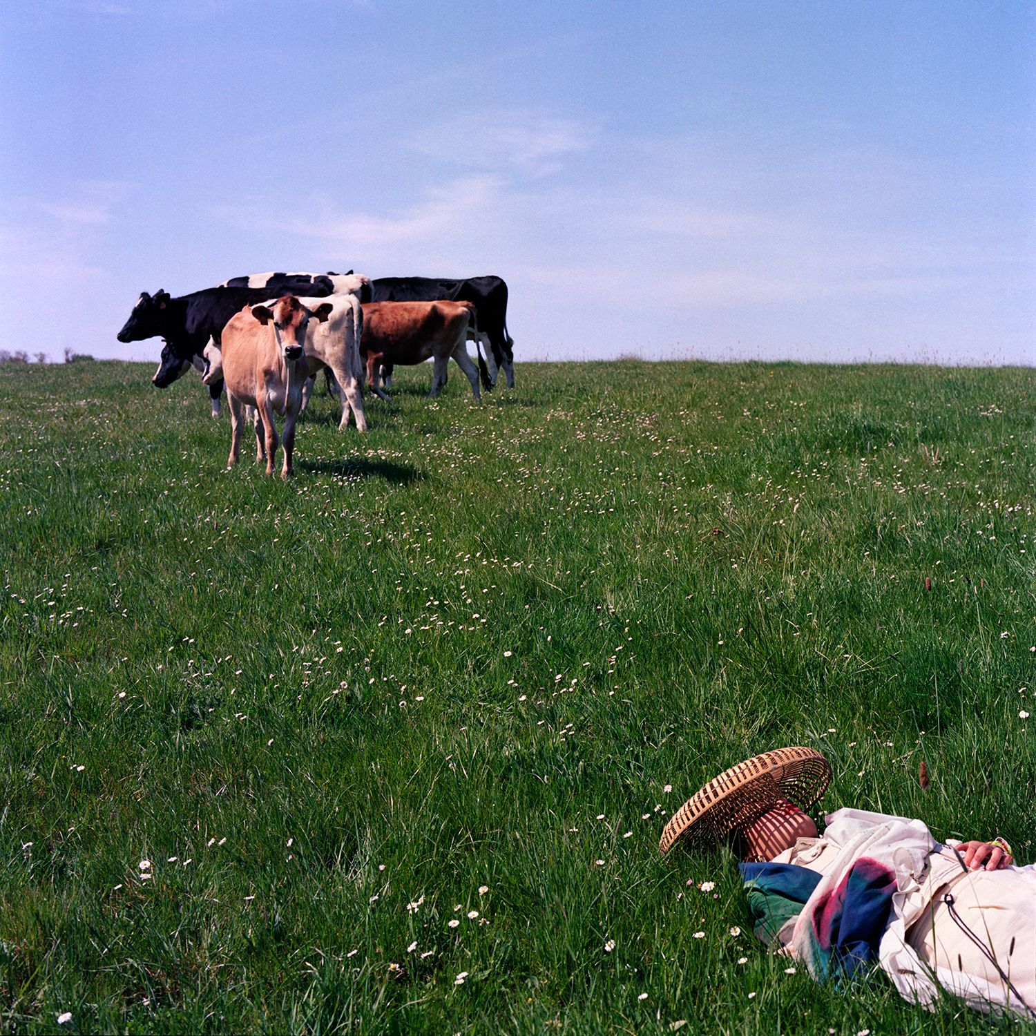 Inès with a Herd of Cows in a Grass Field