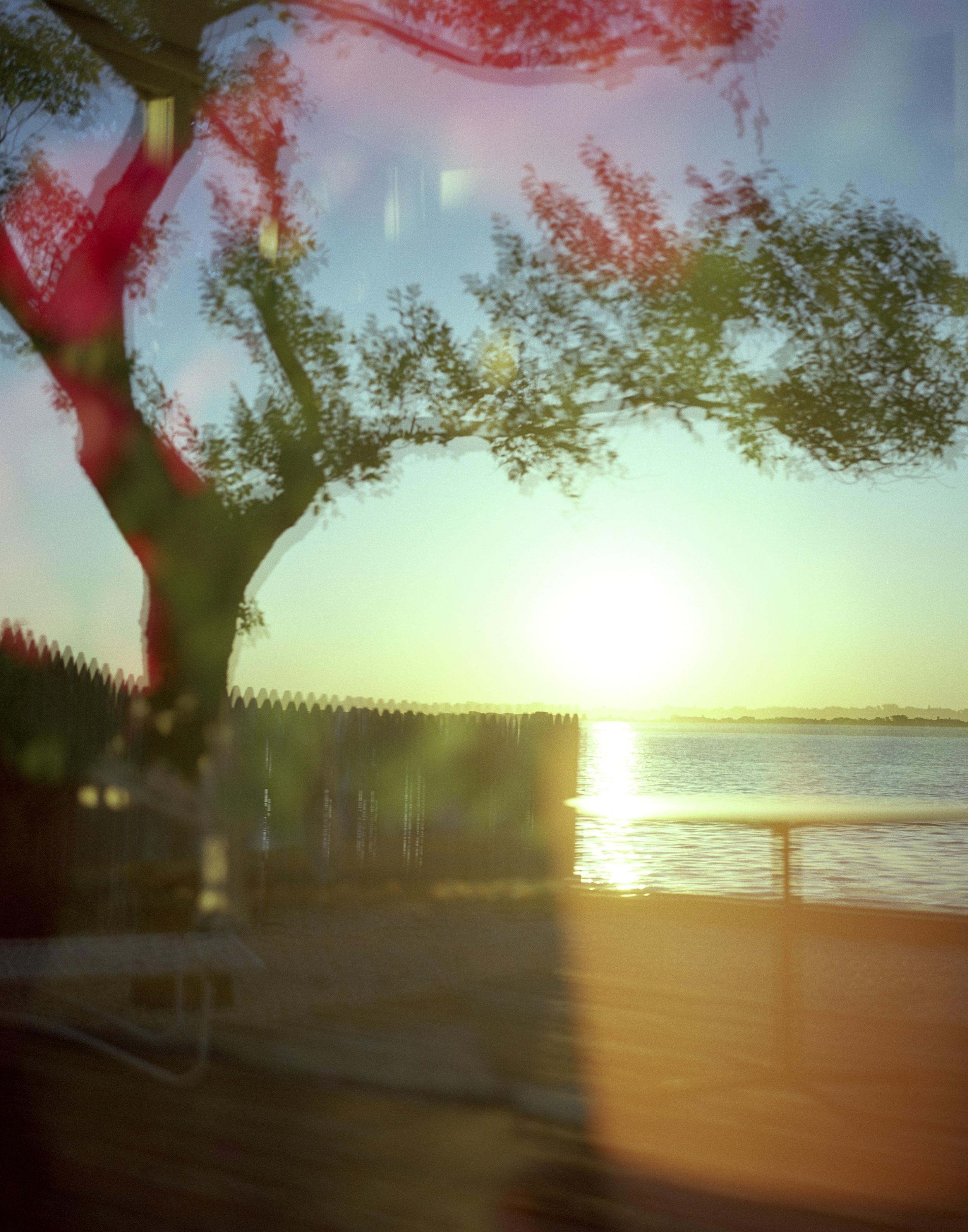 29_psychedelic tree-29.jpg