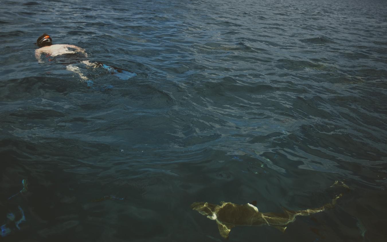 25_sharks.jpg