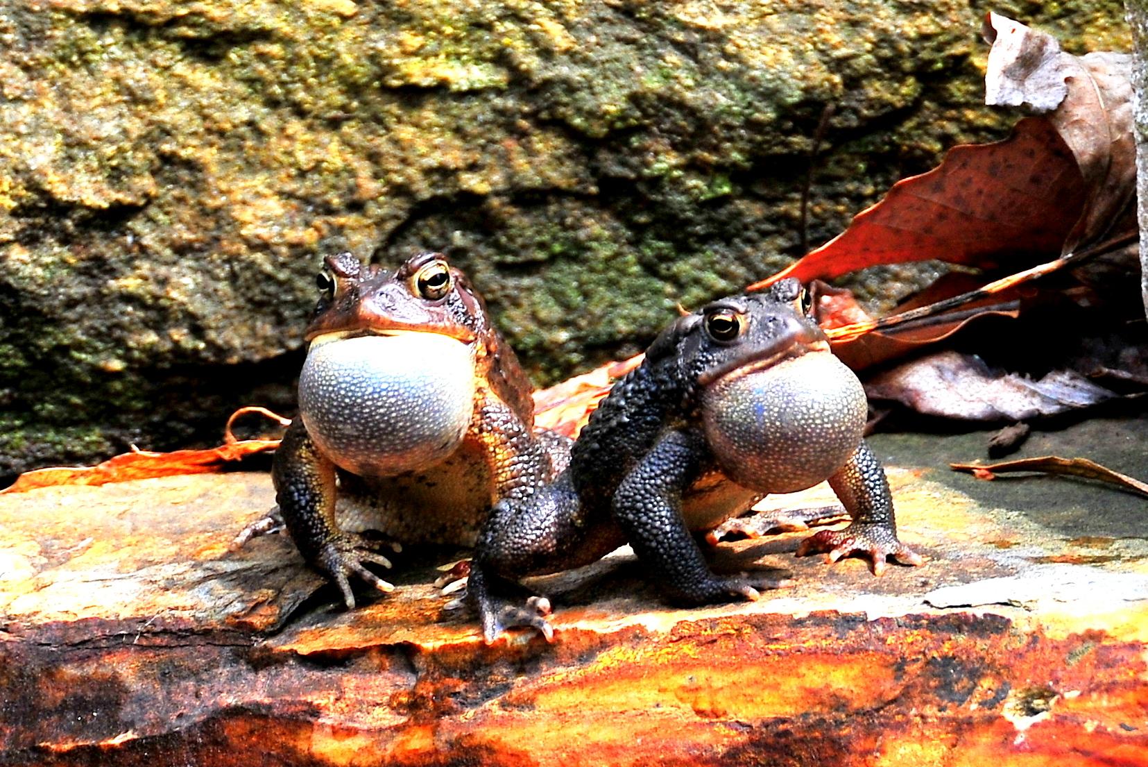 April Frogs 022.JPG