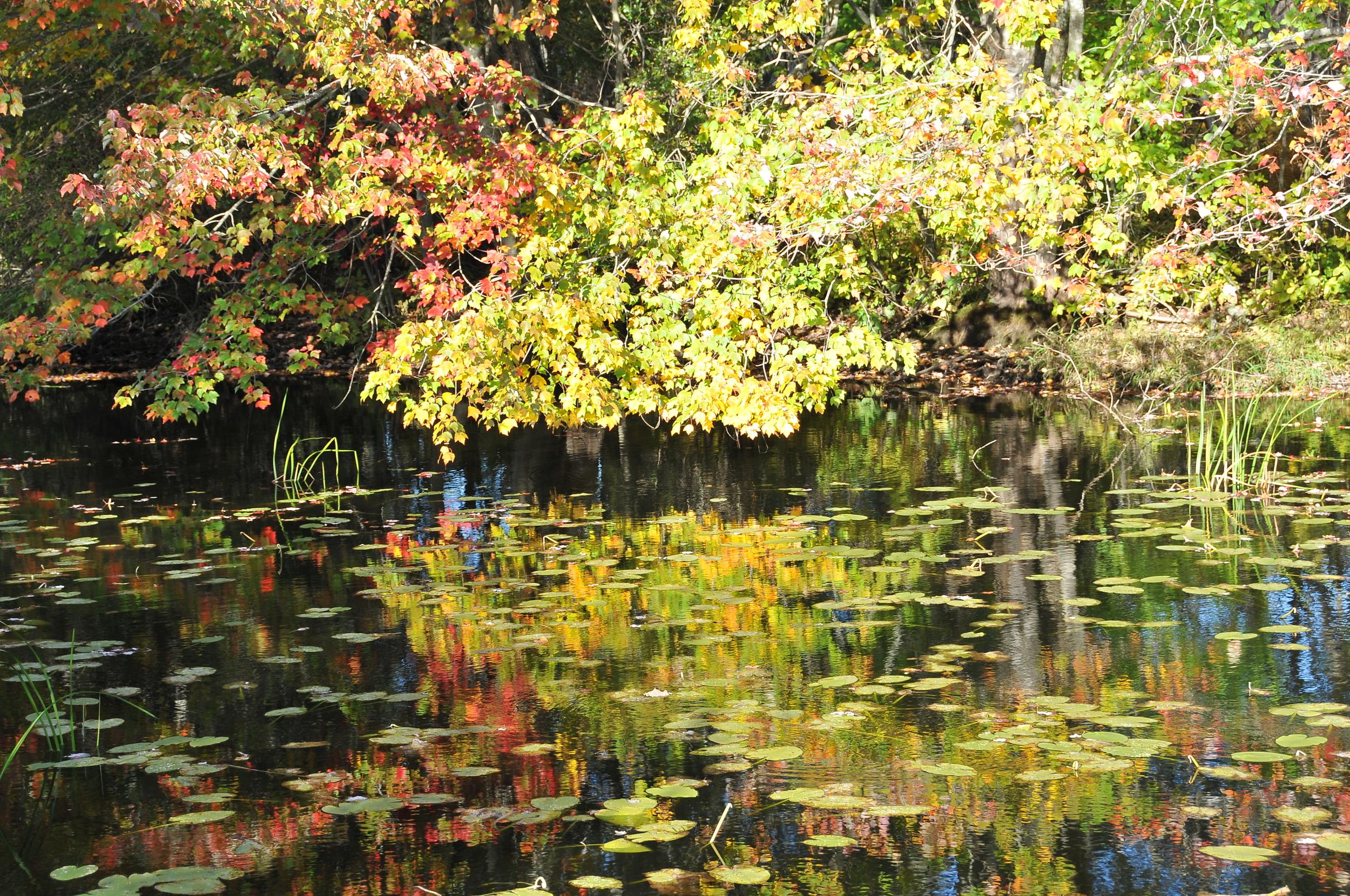 Fall at Trustom Reserve 019.JPG