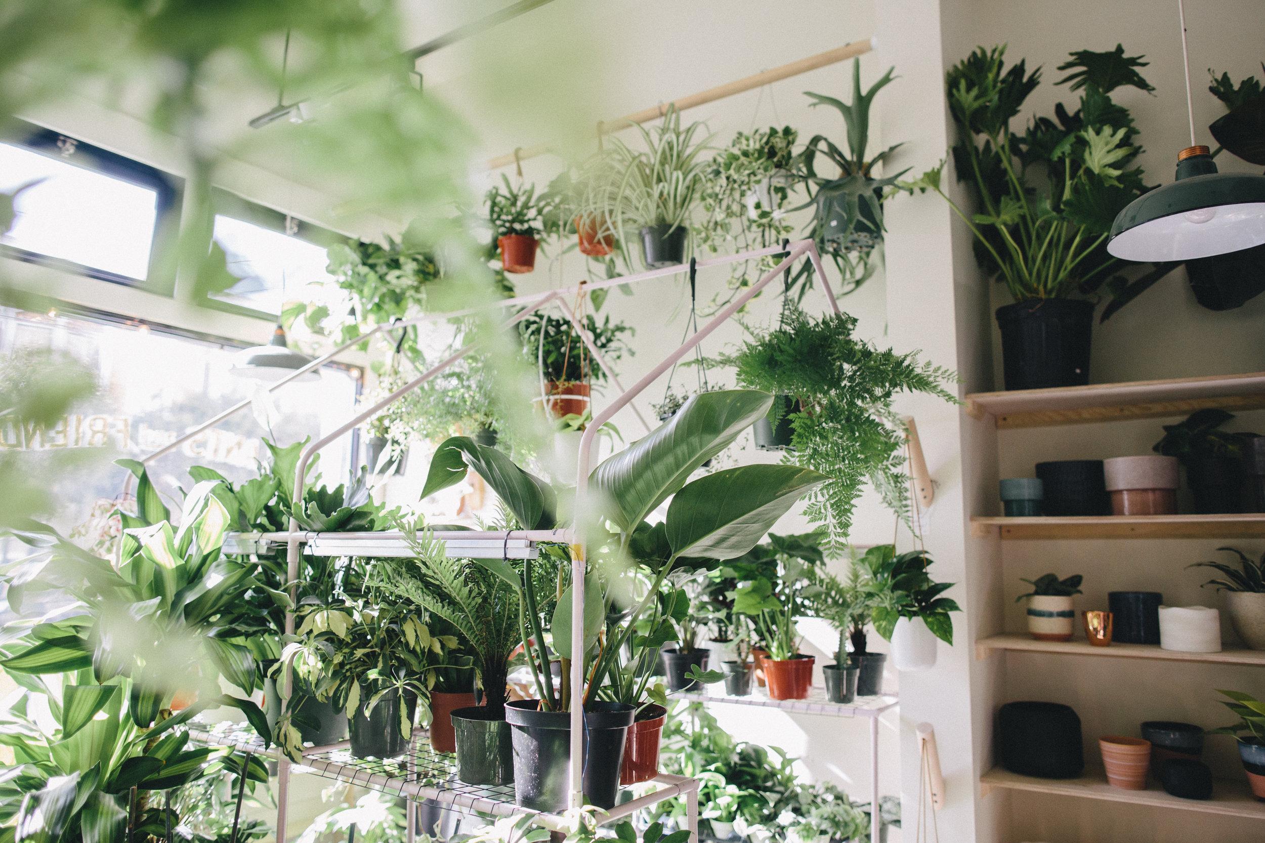 PlantsandFriends2018-96.JPG