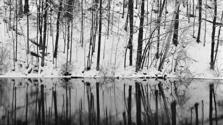 Stillness-Alabahari.jpg