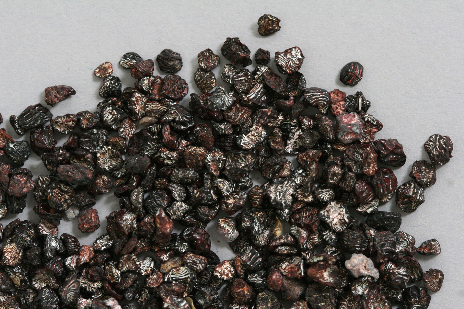 Dried cochineal insects. Photo: E. Phipps