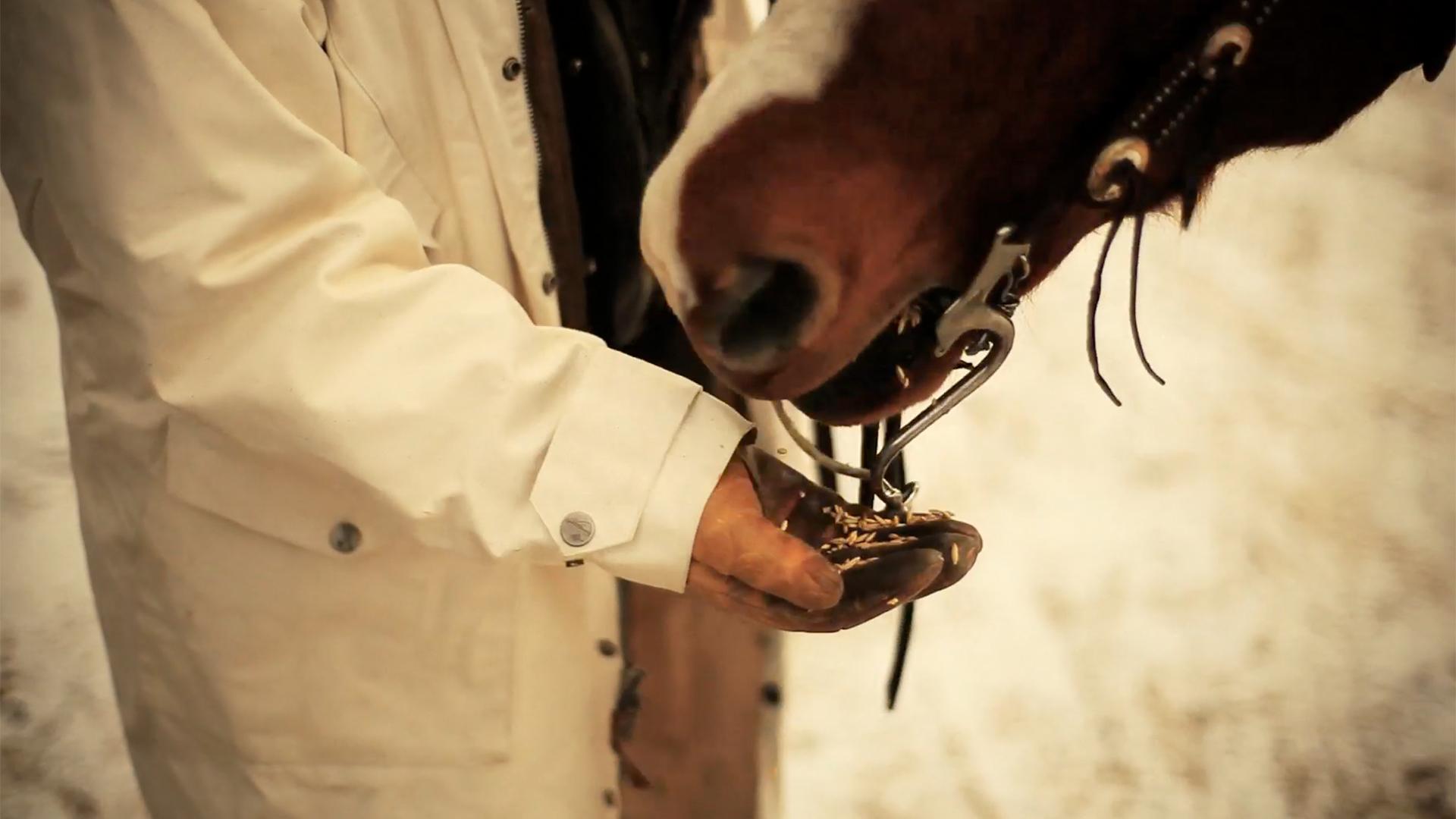 saddle-selects-04.jpg
