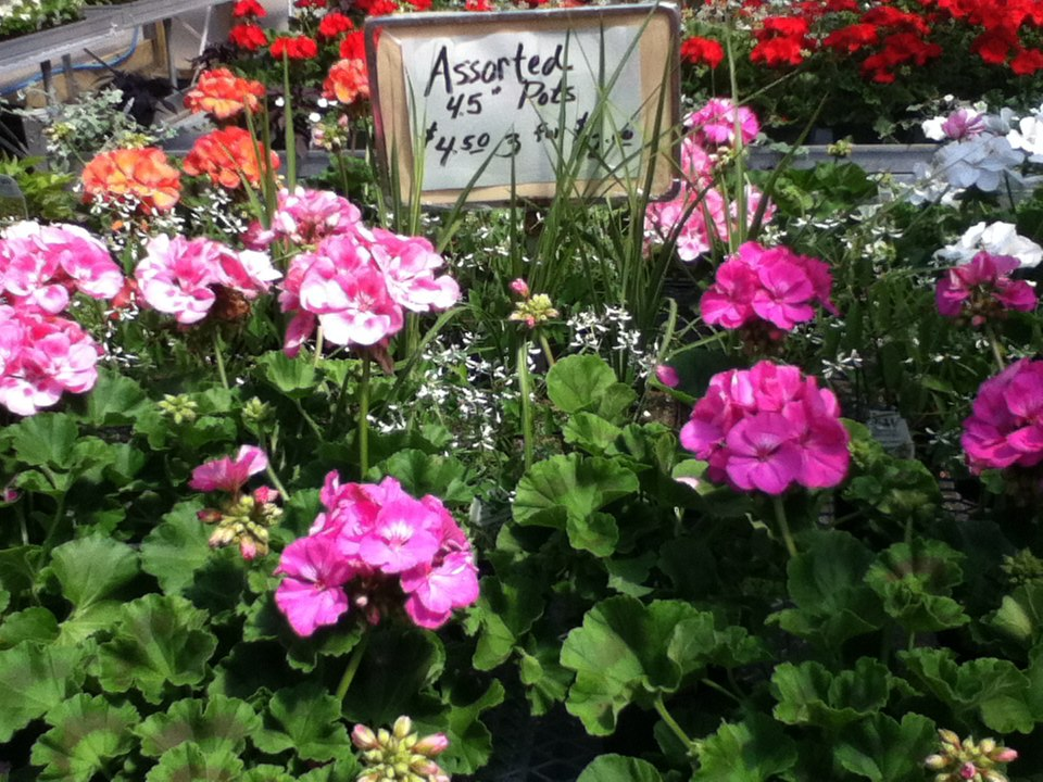 assorted pots sign flowers.jpg
