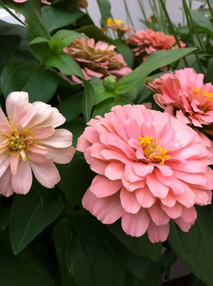 pink summer.jpg