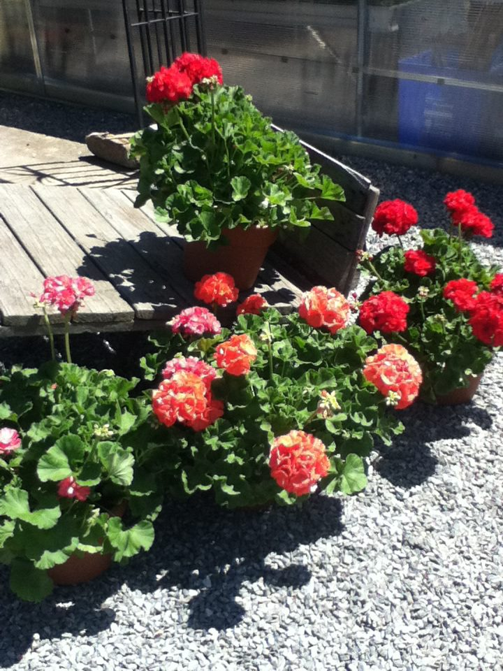 red  flowers wagaon.jpg