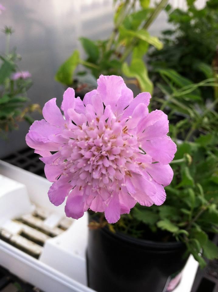 purple single flower.jpg