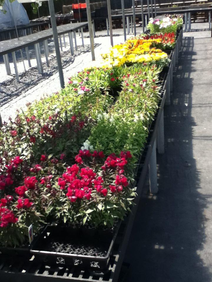 row of flowers table.jpg