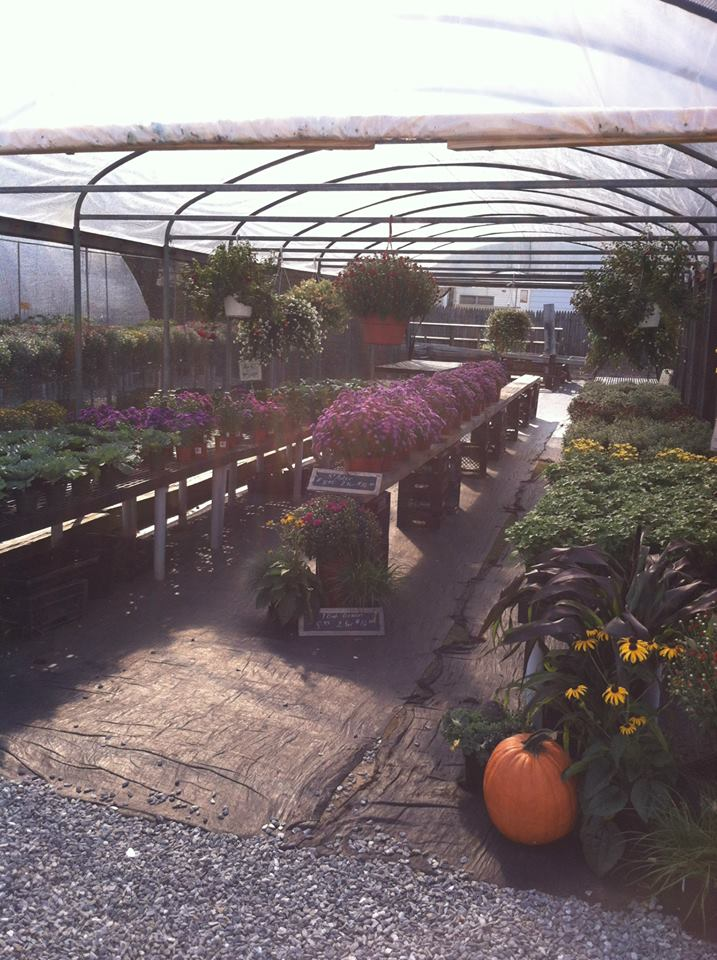 greenhouse fall.jpg