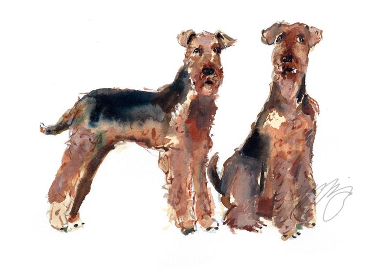 WEB_Dogs.jpg