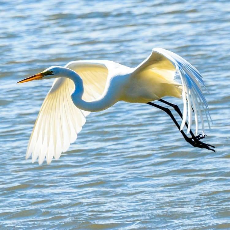 Birds_17.jpg