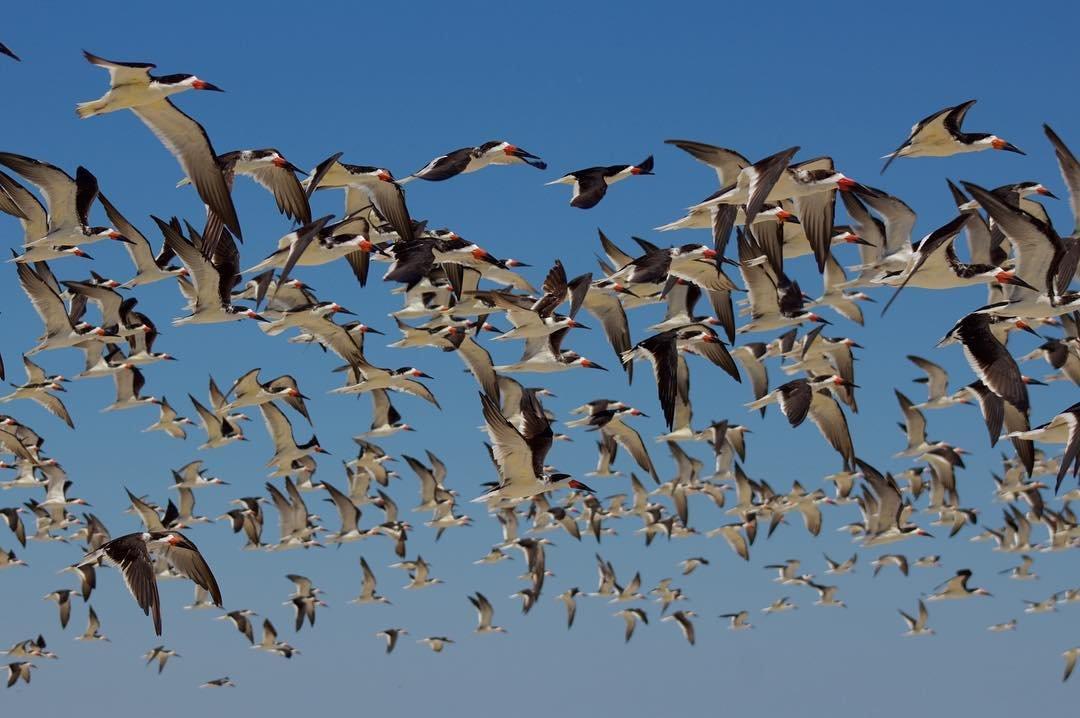 Birds_29.jpg