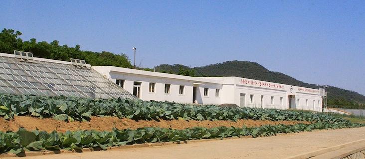 north-korea-mushroom-farm.jpg