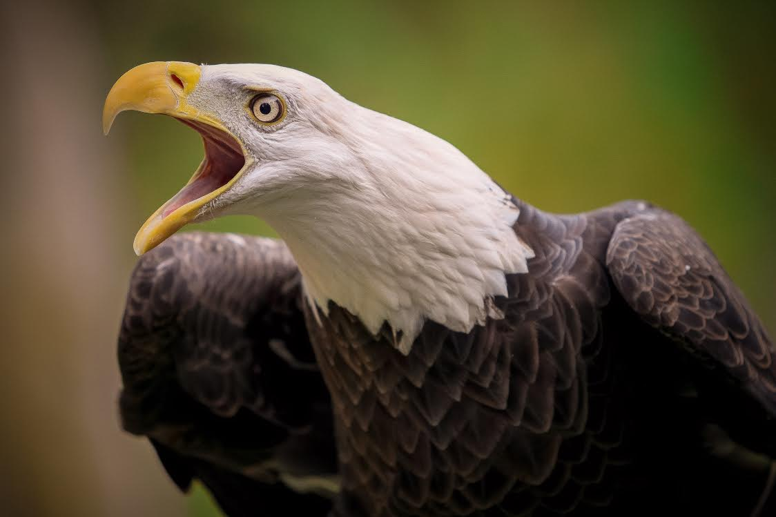 """Eye of the Eagle  by Don Newton. Artist's statement: """"Beauty is in the eye of the subject."""""""