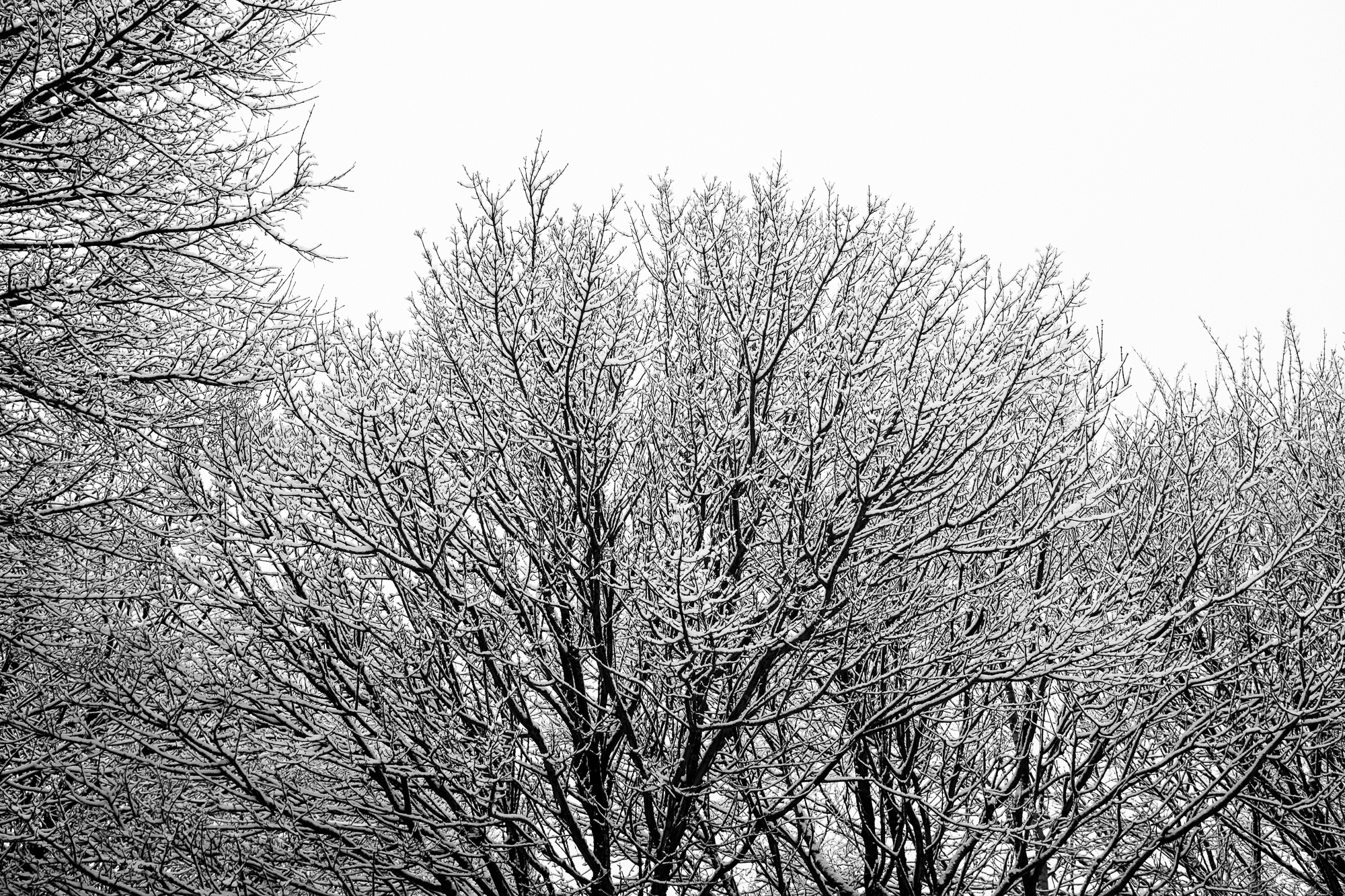 Staffordshire Winter Photography with Snow 7