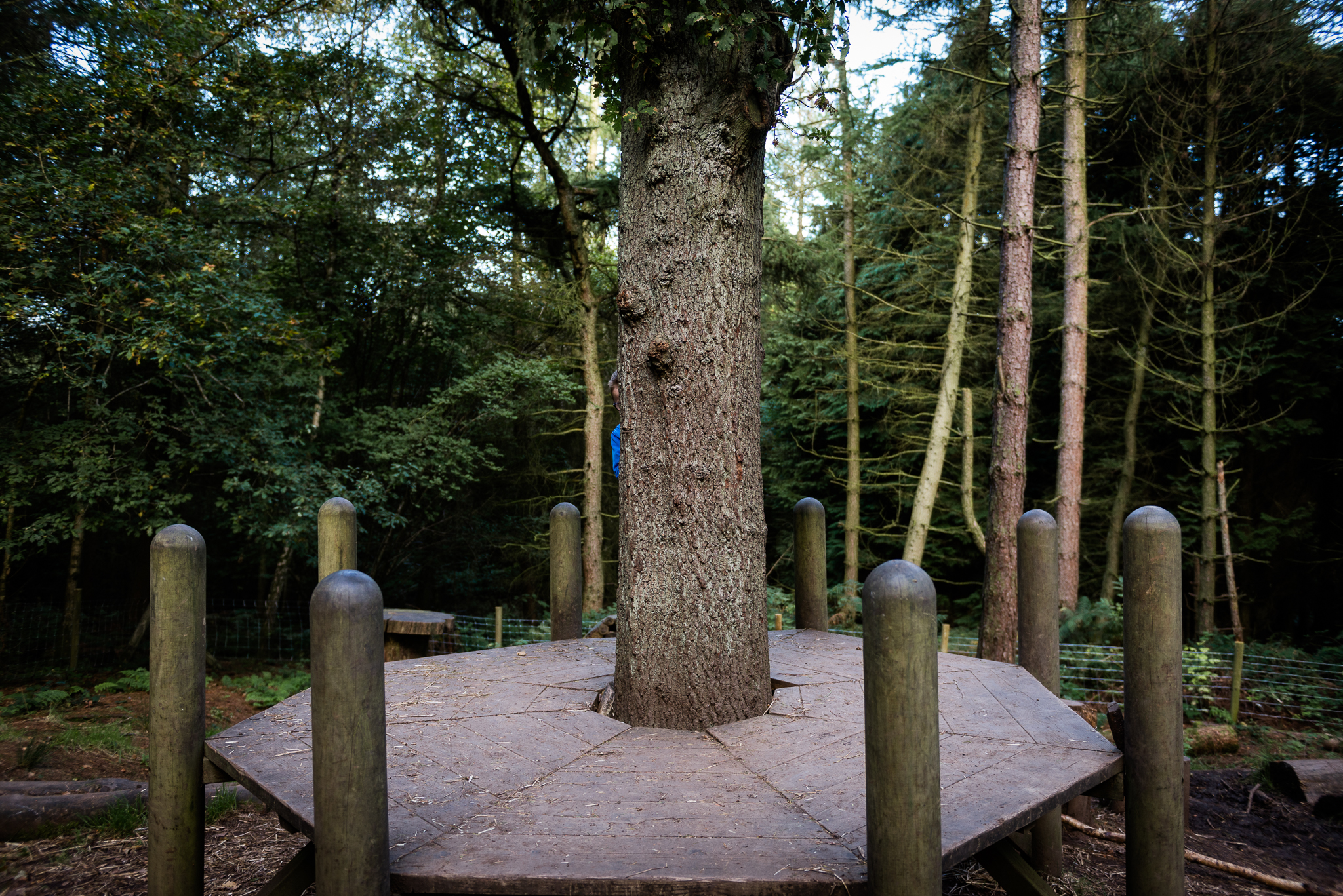 Documentary Family Photography at Clent Hills, Worcestershire Family Lifestyle Photography Woods Outdoors Trees Flying Kite - Jenny Harper-1.jpg