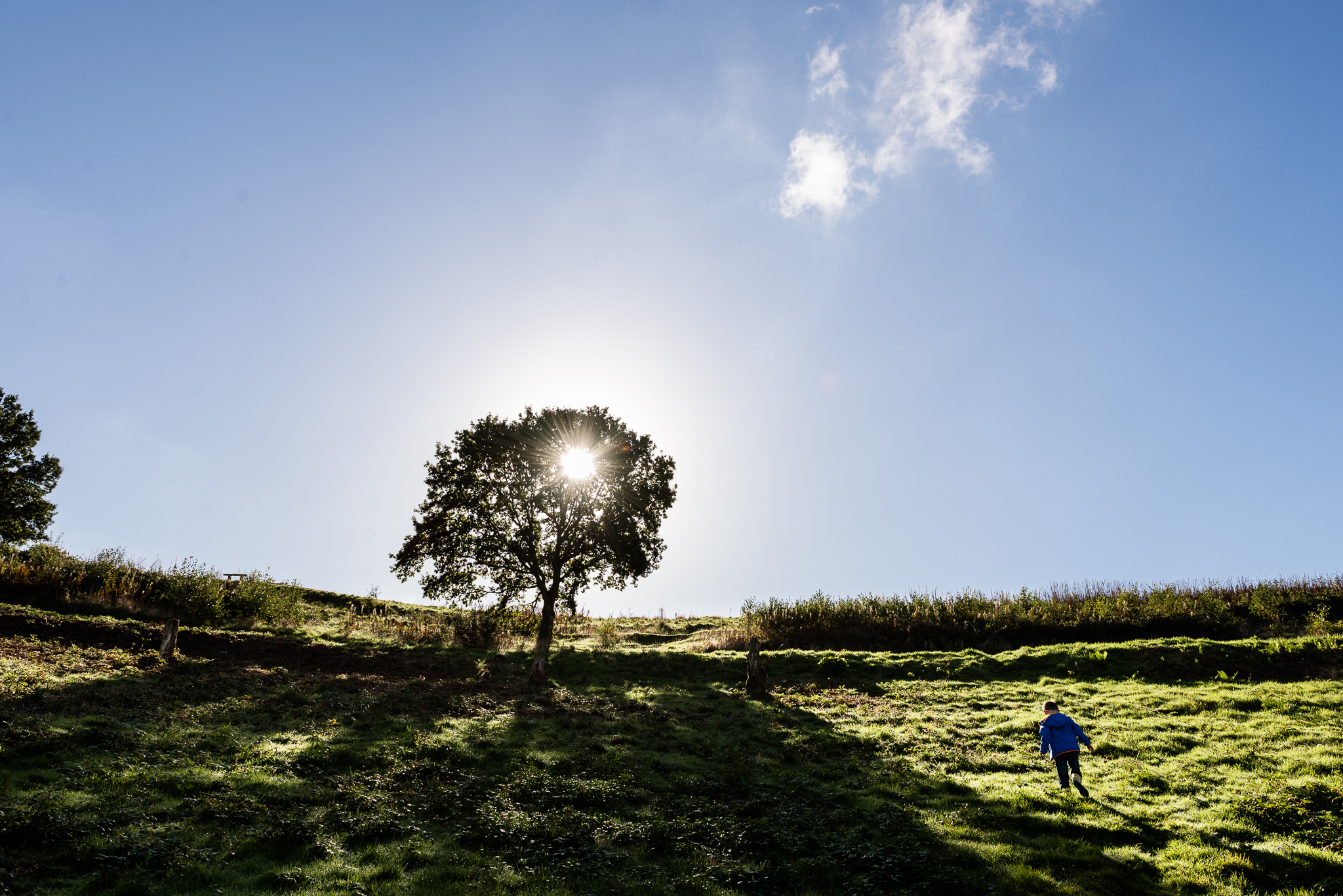 Documentary Family Photography at Clent Hills, Worcestershire Family Lifestyle Photography Woods Outdoors Trees Flying Kite - Jenny Harper-7.jpg