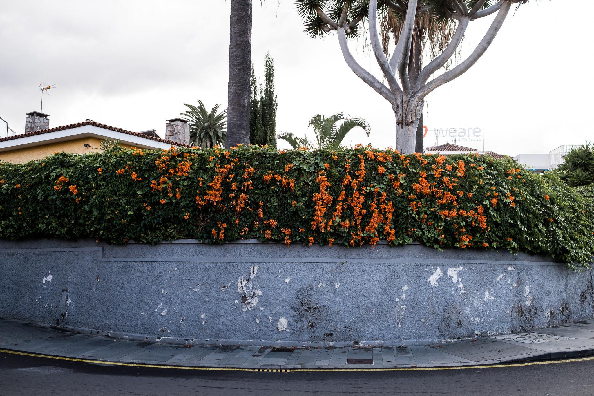 Family Holiday Travel Documentary Photography Tenerife Winter Sun Puerto de la Cruz - Jenny Harper-42.jpg