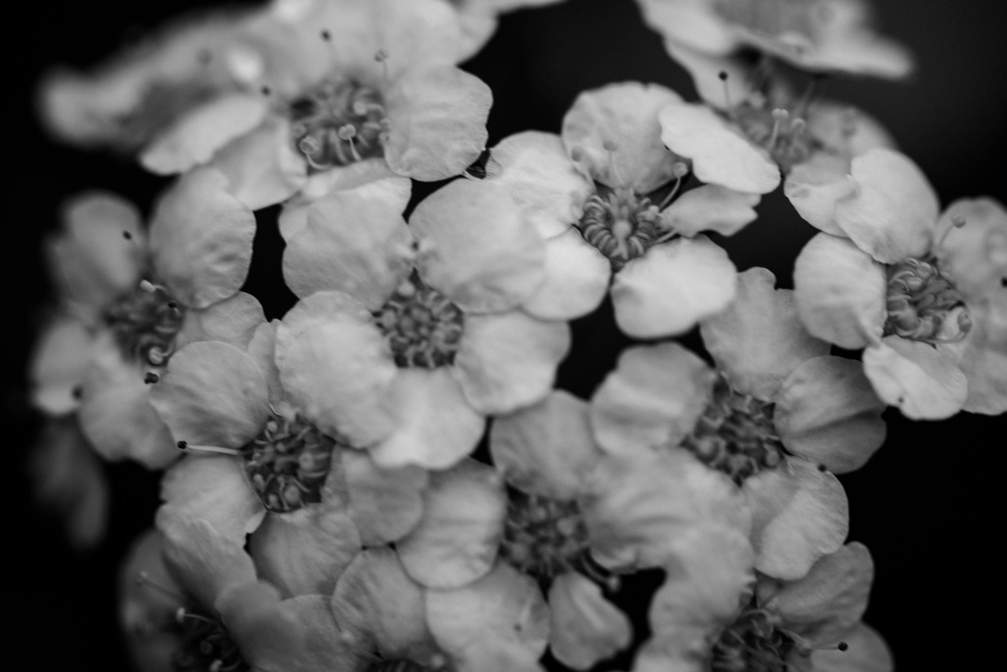 Macro Photography Garden Nature Natural Growth-5.jpg