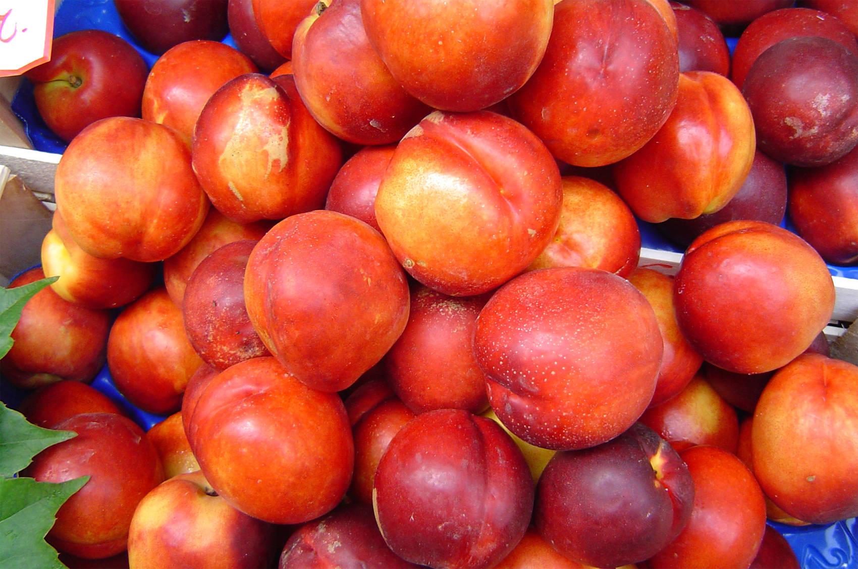 nectarines.jpg