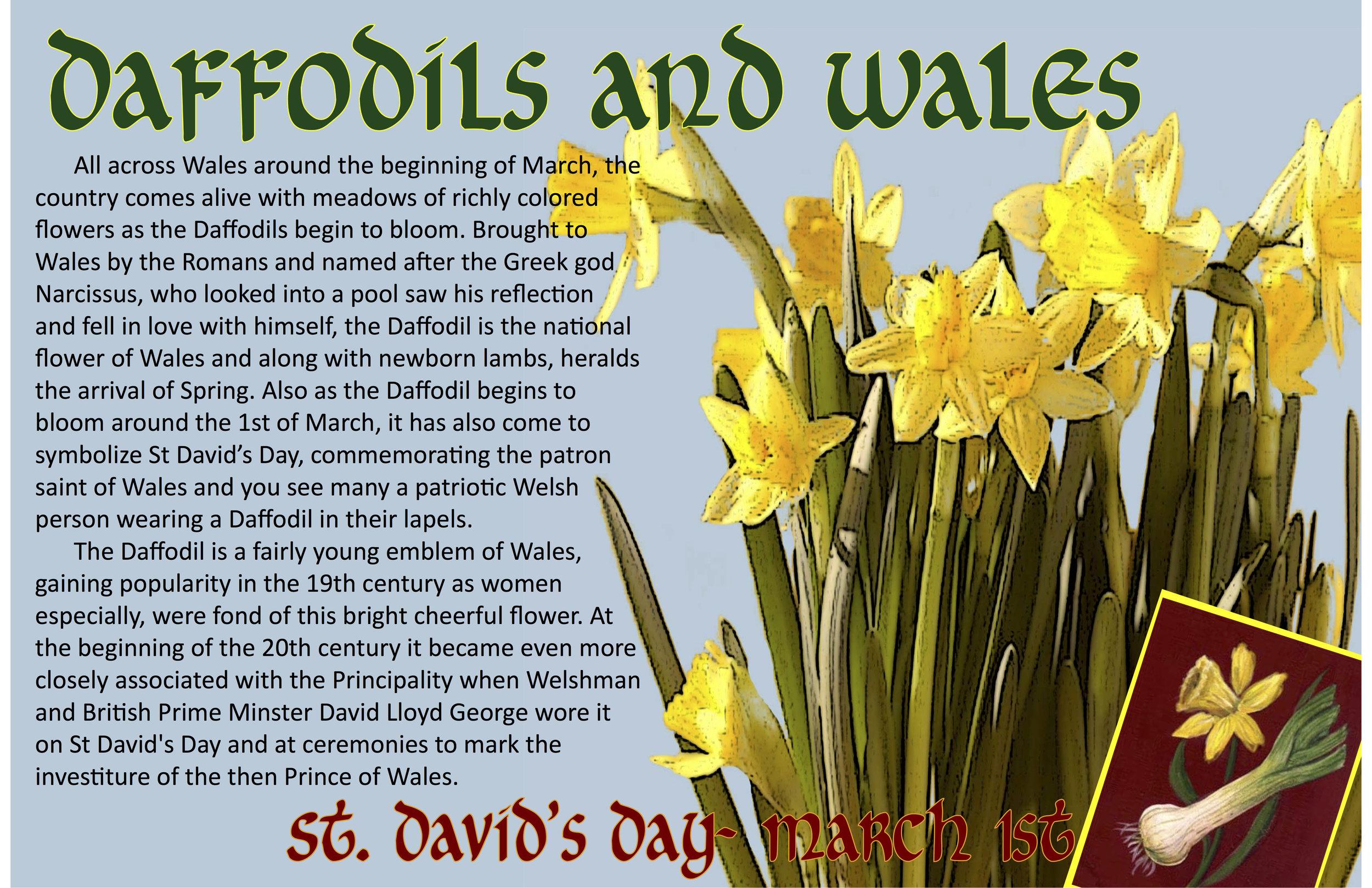 Wales • Daffodil