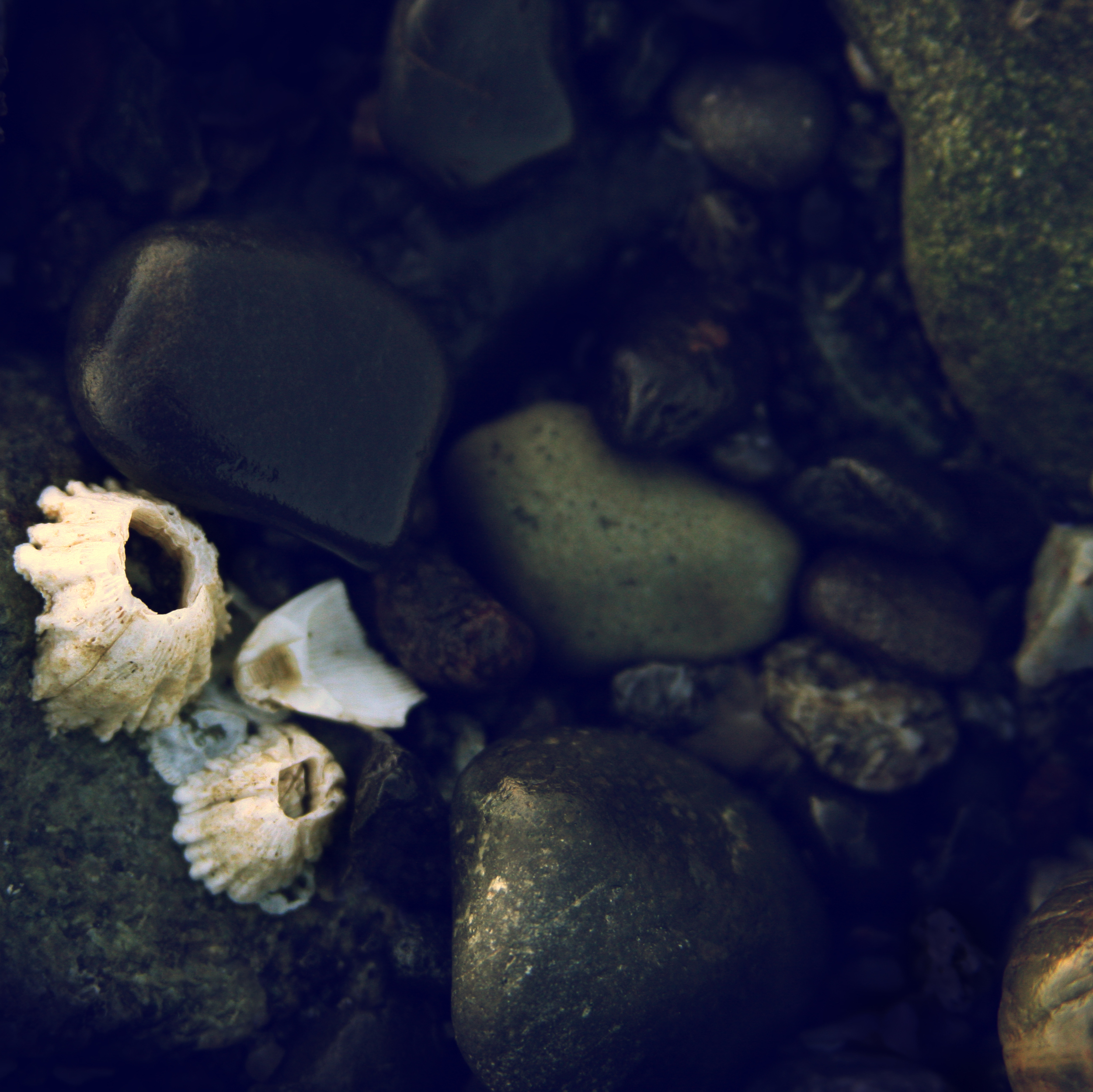 Portrait of a barnacles 3.jpg