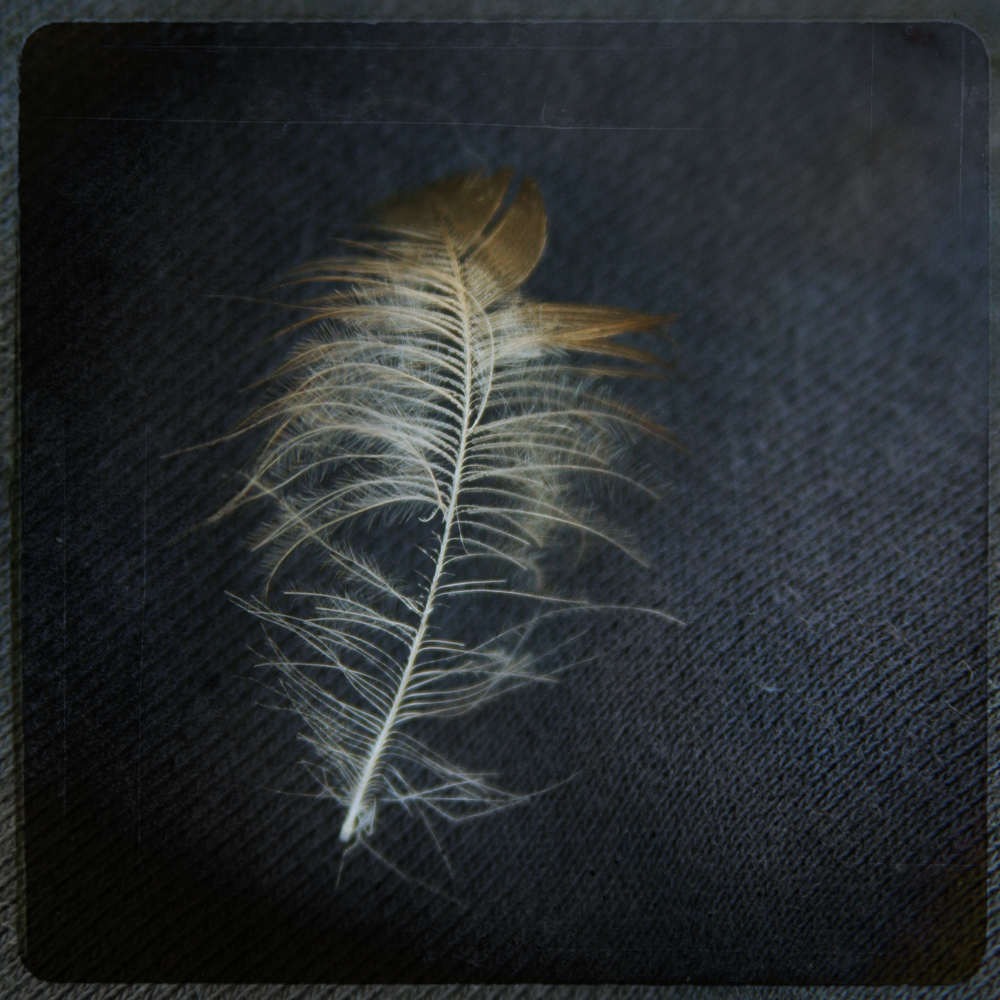 Portrait of a Feather 4.jpg