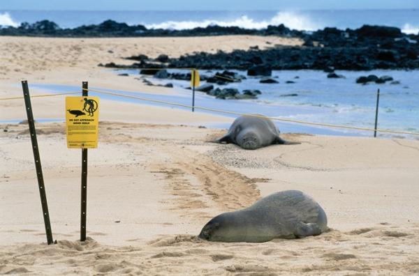 Hawaii Tourism Authority ( HTA ) Robert Coello
