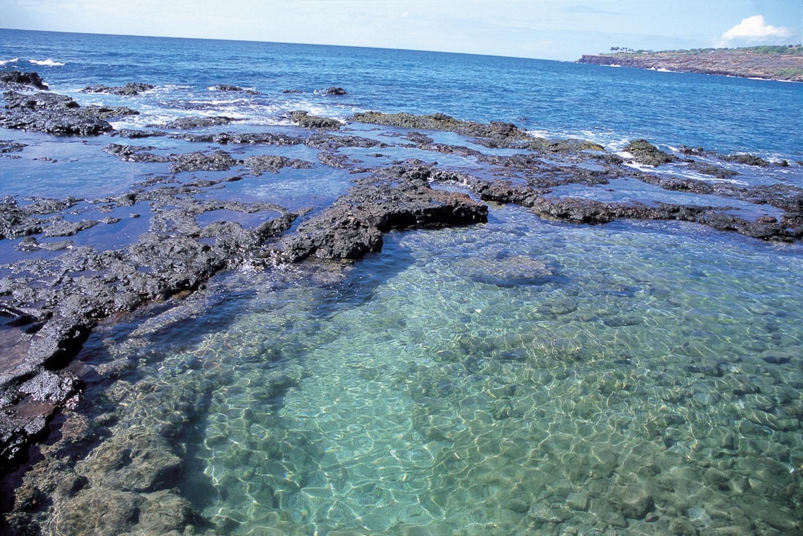 Hawaii Tourism Japan ( HTJ)