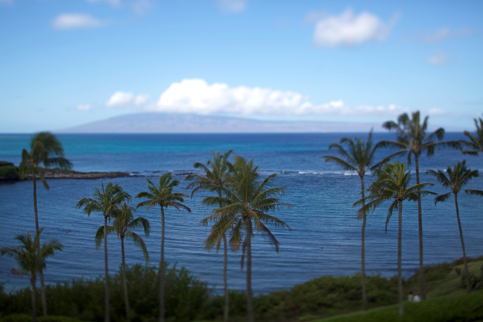 Palms with Lani in background Hawaii Toursit Authority Max Wanger