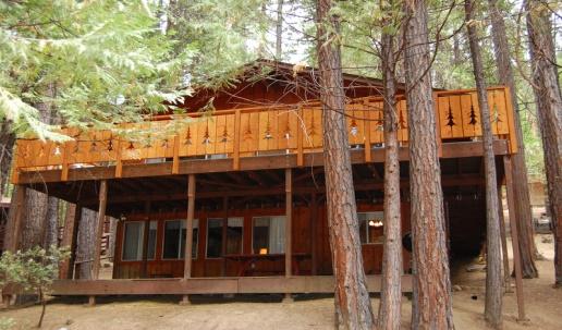 Redwoods 1.jpg