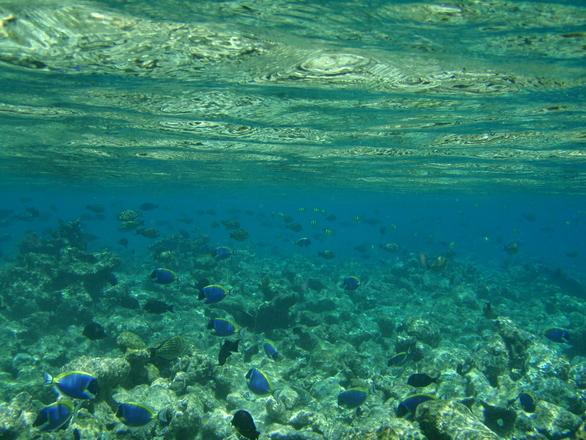 maldives-1244947.jpg
