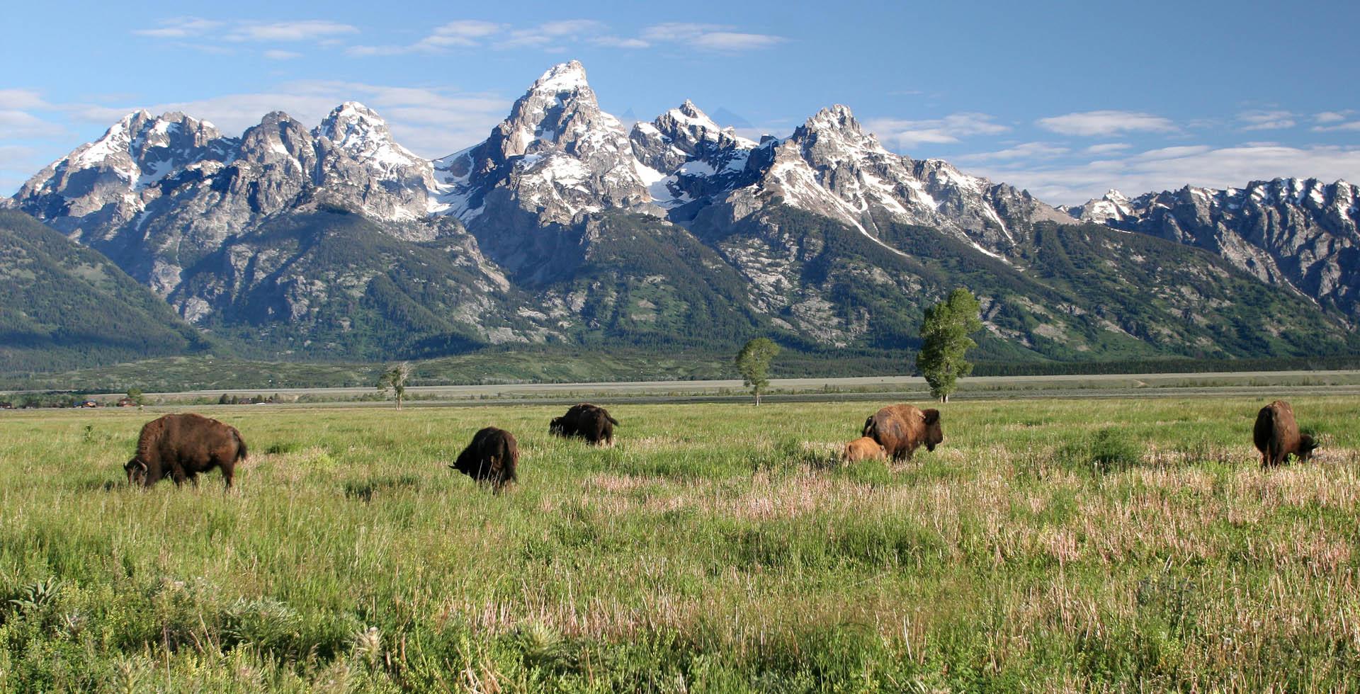1340693 Yellowstone BG.jpg