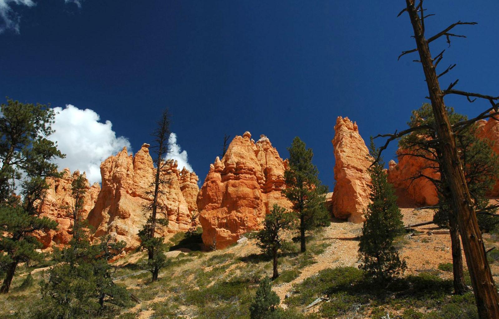 bryce-canyon-1392815.jpg